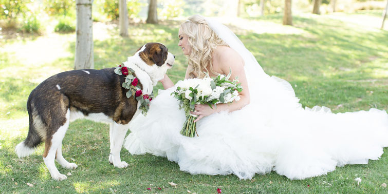 Vellano Estate by Wedgewood Weddings featuring our bride's four-legged friend
