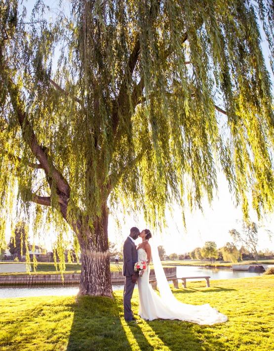 Dramatic willow tree - San Ramon - San Ramon, California - Contra Costa County - Wedgewood Weddings
