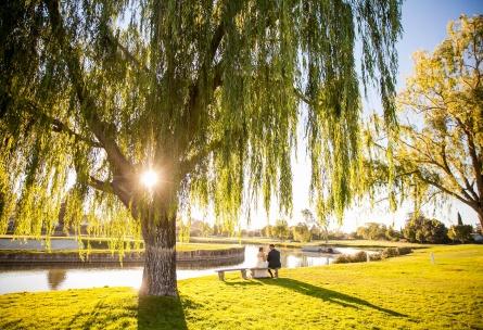 picturesque willow tree - San Ramon - San Ramon, California - Contra Costa County - Wedgewood Weddings