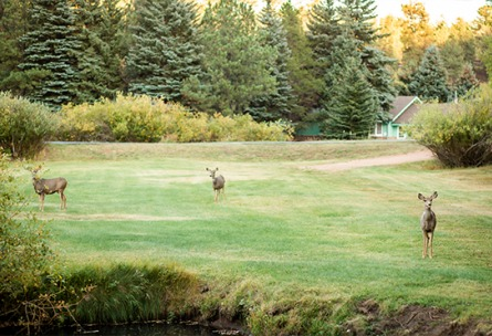 Happy Wildlife Mountain View Ranch - Pine, Colorado - Jefferson County - Wedgewood Weddings