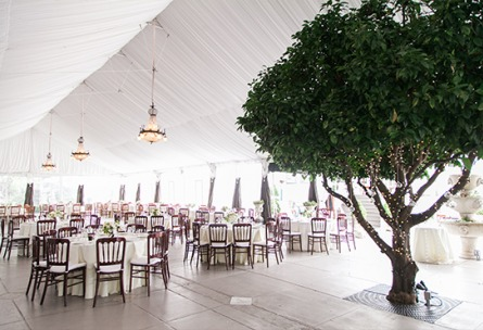 Natural daylight pours into the reception space of this elegant wedding - Jefferson Street Mansion - Benicia, California - Solano County - Wedgewood Weddings