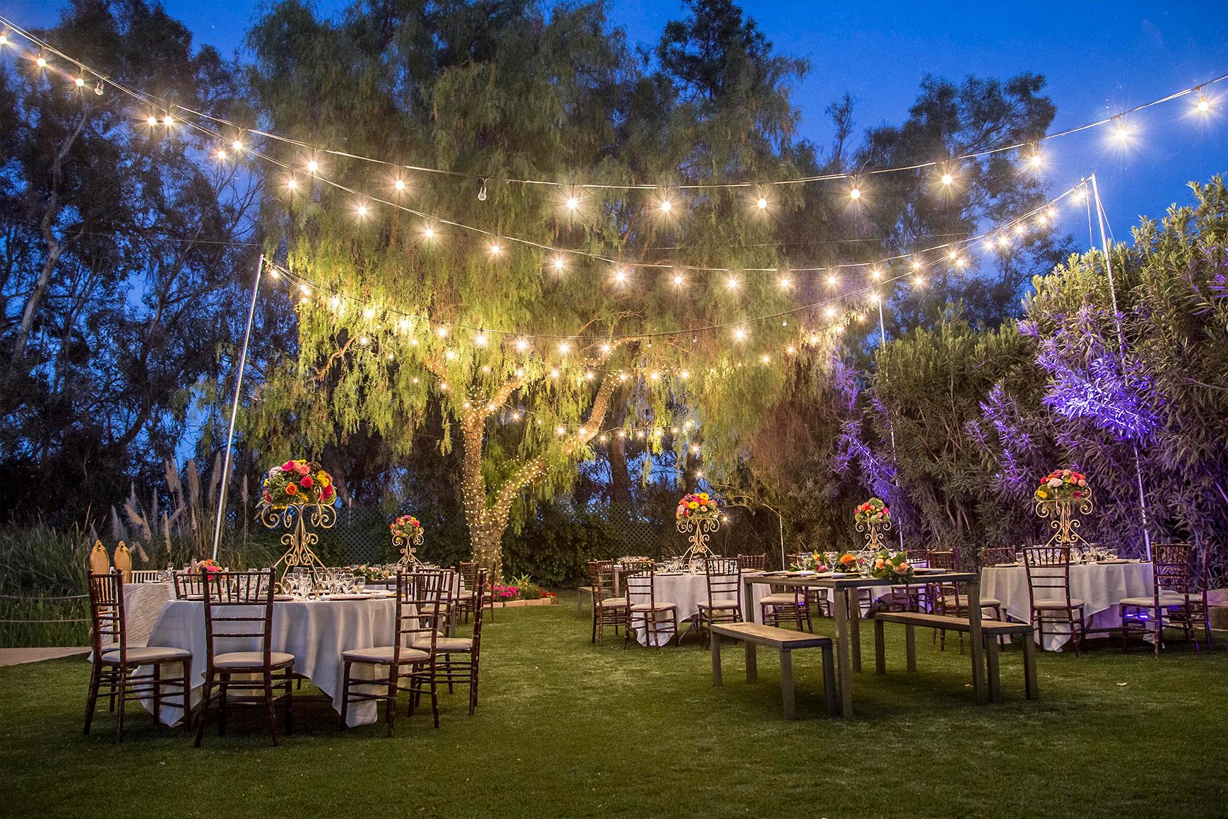 Reception twinkle lights - Orchard - Menifee, California - Riverside County - Wedgewood Weddings